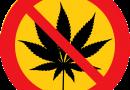 """Neurociências em Debate: """"Cannabis causa rompimento de circuitos neurais"""""""